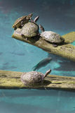 Turtles meeting Royalty Free Stock Photos