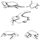 Turtles. Pencil sketch by hand Royalty Free Stock Photo