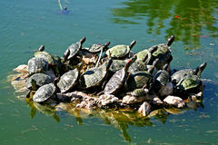 Turtles in a pond. Turtles are enjoying the sun on a rock in a little pond in the Attica Zoo Park, Greece royalty free stock photos