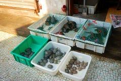 Turtles at Qinping Market, Guangzhou, China Stock Photos