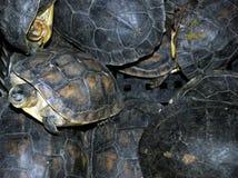 Turtles at Qinping Market, Guangzhou, China Stock Images
