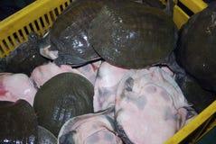 Turtles at Qinping Market, Guangzhou, China Royalty Free Stock Images
