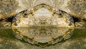 Turtles refleted in a pond Royalty Free Stock Photo