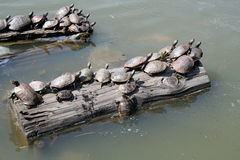 Turtles rest Royalty Free Stock Photography