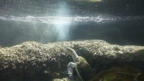 Turtles. Sea Turtles. Underwater Observatory Marine Park. Eilat, Israel stock video