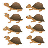 Turtles set. Vector cartoon collection. Royalty Free Stock Images