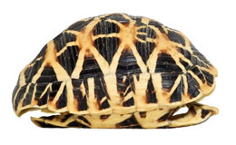 Turtles shell isolated. Side view of a tortoise shell isolated on white Royalty Free Stock Images