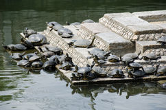 Turtles on stairs in a temple Stock Photos