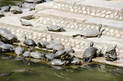 Turtles on stairs in a temple Royalty Free Stock Photography