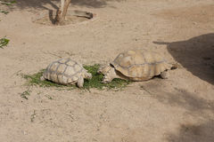 Turtles Sunning photo Stock Photos