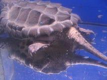 Turtles Tail Stock Photo