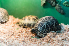 Turtles in terrarium. With selective focus Royalty Free Stock Photography