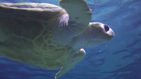 Turtles, Tortoises, Reptiles, Animals, Wildlife stock footage