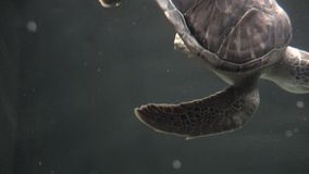 Turtles, Tortoises, Reptiles, Animals, Wildlife stock video
