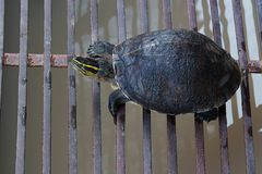 Turtles tries. Up to stand Stock Images