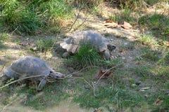 Turtles Stock Image