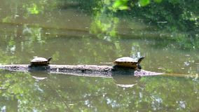 Turtles stock video footage