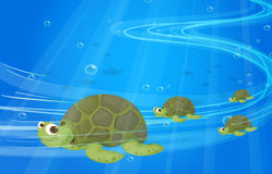 Turtles under the sea Stock Photography