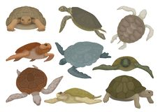 Turtles in various views set, tortoise reptile animals vector Illustration on a white background. Turtles in various views set, tortoise reptile animals vector stock illustration