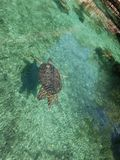 Turtles in xcaret Stock Photos
