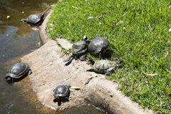 Turtles in a zoo Stock Image