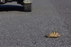Turtoise横穿路 库存照片