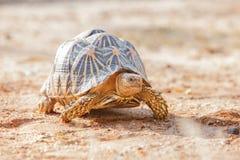 Turtoise Stock Photo