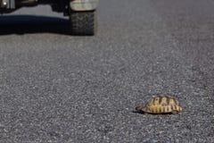 Turtoise die weg kruisen Stock Foto's