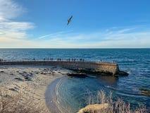 Turyści i seagulls zegarka denni lwy odpoczywają na losu angeles Jolla plaży zdjęcia royalty free