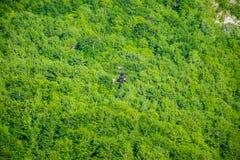 Turyści jadą na Zipline przez jaru Tara rzeka obraz royalty free