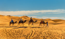 Turyści jedzie wielbłądy przy ergiem Chebbi blisko Merzouga w Maroko Fotografia Stock