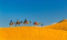 Turyści jedzie wielbłądy przy ergiem Chebbi blisko Merzouga w Maroko Zdjęcie Stock