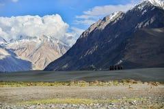 Turyści jedzie wielbłądy z Śnieżną górą Zdjęcie Royalty Free