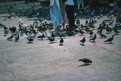 turyści karmi gołębie Obrazy Royalty Free