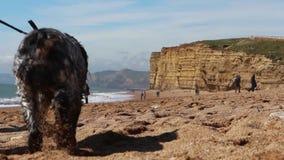 Turyści na Brytyjskim otoczaku wyrzucać na brzeg z tło falezami zdjęcie wideo