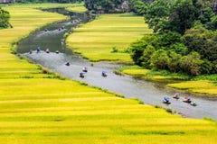 Turyści podróżuje na strumieniu z dojrzewają ryżowych paski z obu stron strumienia wnętrzy obraz royalty free