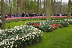 Turyści w Keukenhof ogródzie Kwiecień 2015 Fotografia Royalty Free