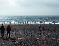 Turyści w skalistej plaży Snaefellsnes, Iceland Zdjęcie Stock