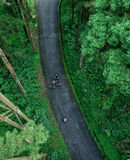 Turyści chodzi w lesie Fotografia Royalty Free