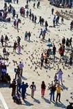 Turyści na San Marco kwadrata karmie Obraz Stock