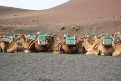 turystów czekać Zdjęcia Stock