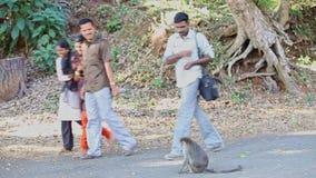 Turystów mężczyzna dziewczyn spaceru zegarka karmy małpa na drodze przemian w parku zbiory