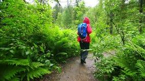 Turysta chodzi przez zwartego lasu zbiory wideo
