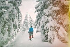 Turysta chodzi w zima lesie Obrazy Stock