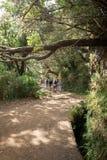 Turysta chodzi wzdłuż irygacyjnych kanałów Historyczny dostawa wody system, znać jako Levada w tropikalnym lesie, madery wyspa Fotografia Royalty Free