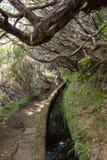 Turysta chodzi wzdłuż irygacyjnych kanałów Historyczny dostawa wody system, znać jako Levada w tropikalnym lesie, madery wyspa Zdjęcia Stock