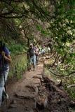 Turysta chodzi wzdłuż irygacyjnych kanałów Historyczny dostawa wody system, znać jako Levada w tropikalnym lesie, madery wyspa, Obraz Stock