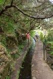 Turysta chodzi wzdłuż irygacyjnych kanałów Historyczny dostawa wody system, znać jako Levada w tropikalnym lesie, madery wyspa, Fotografia Royalty Free