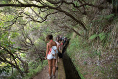 Turysta chodzi wzdłuż irygacyjnych kanałów Historyczny dostawa wody system, znać jako Levada w tropikalnym lesie, madery wyspa, Zdjęcie Stock