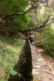 Turysta chodzi wzdłuż irygacyjnych kanałów Historyczny dostawa wody system, znać jako Levada w tropikalnym lesie, madery wyspa, Obrazy Royalty Free